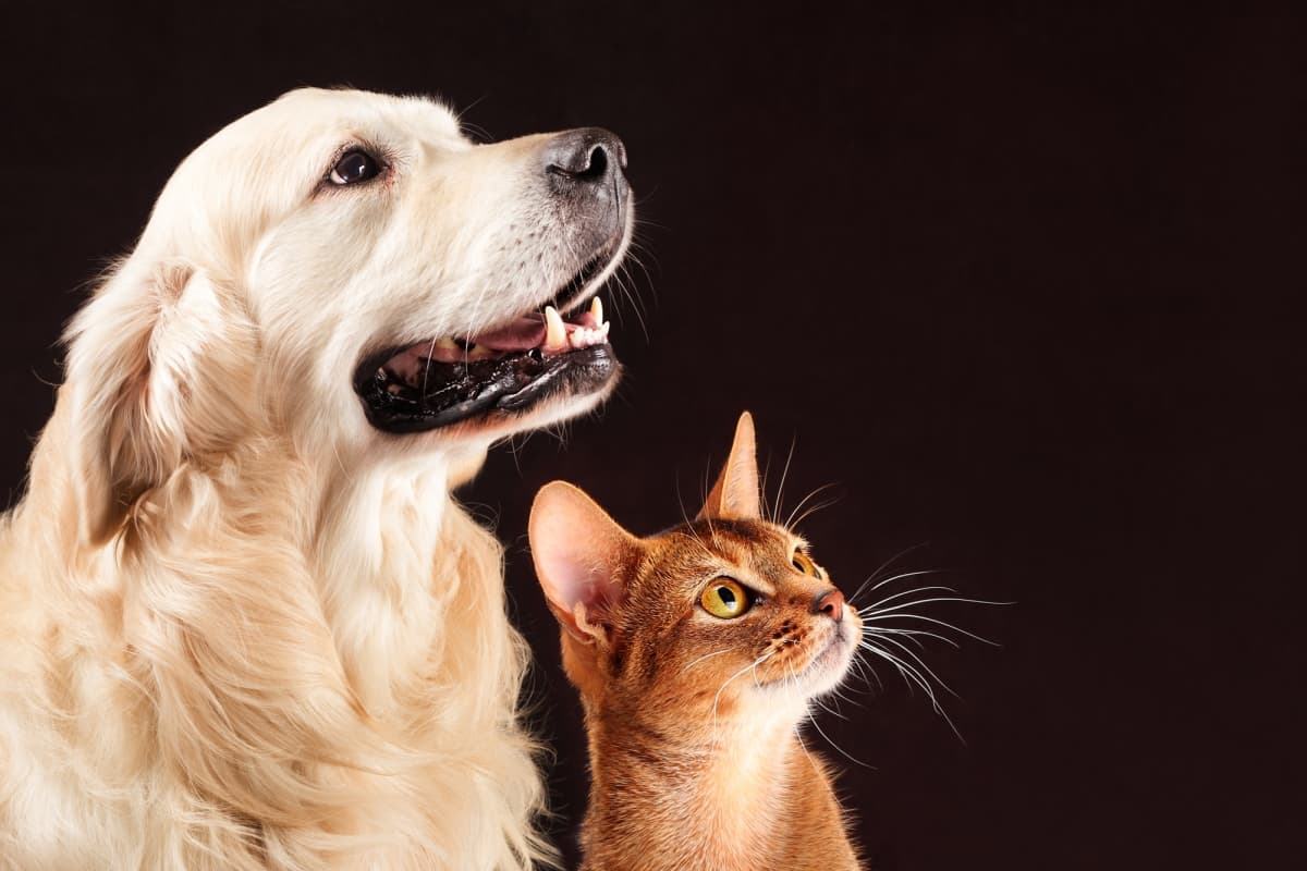 7 secretos del idioma de sus mascotas