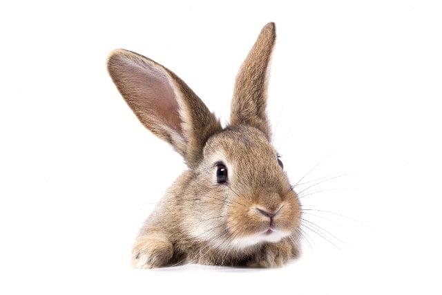 secretos de tu conejo