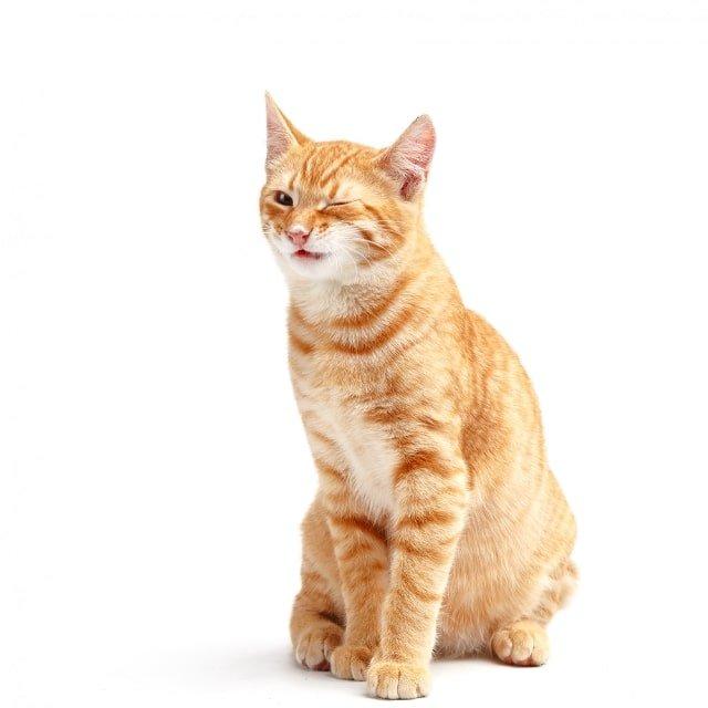 los secretos de tu gato