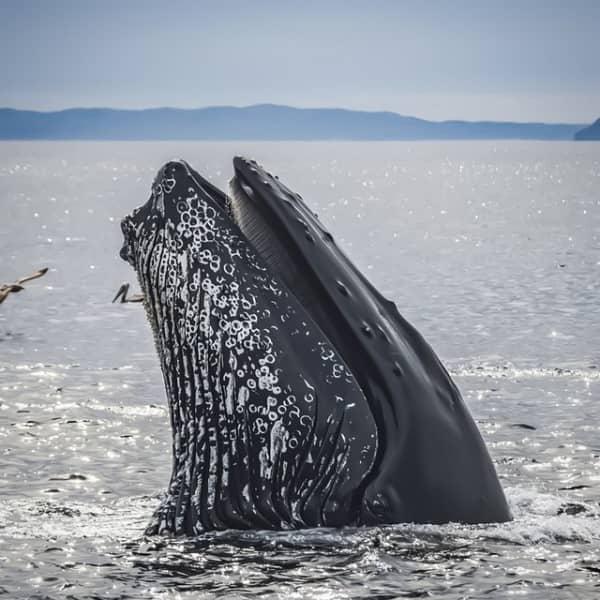 ver ballenas en Colombia