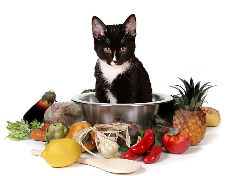que alimentos no se deben dar a los gatos