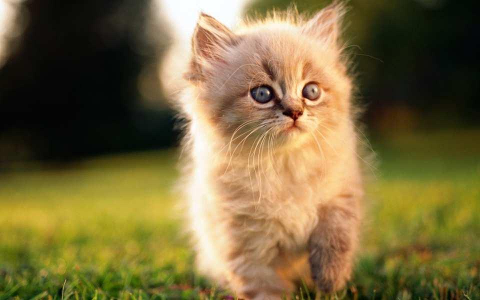 5 Mitos sobre los gatos que son mentira