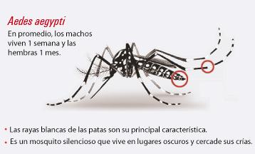 Chikunguña en Colombia