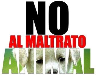 Cómo denunciar el maltrato animal en Colombia