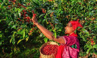 las mejores marcas de café colombiano