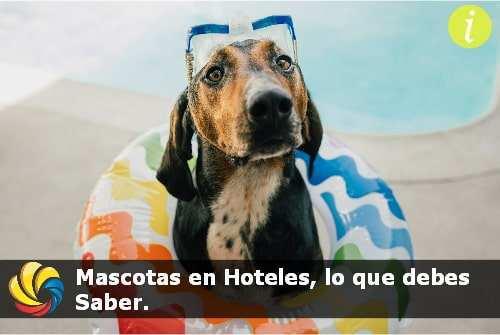 mascotas en hoteles de lujo